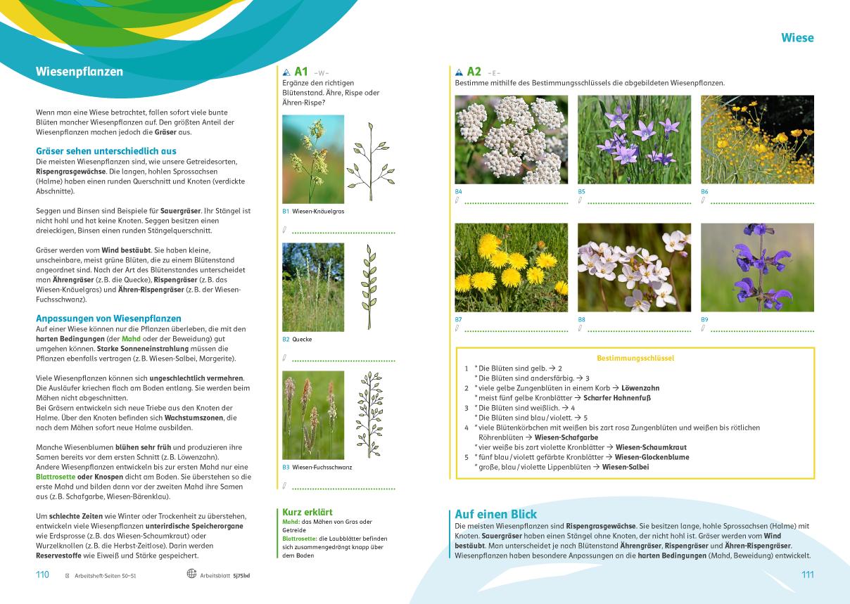 Praxistaugliche Übungen zur Förderung der Artenkenntnis, einfach bio 3, Schulbuch S. 110-111